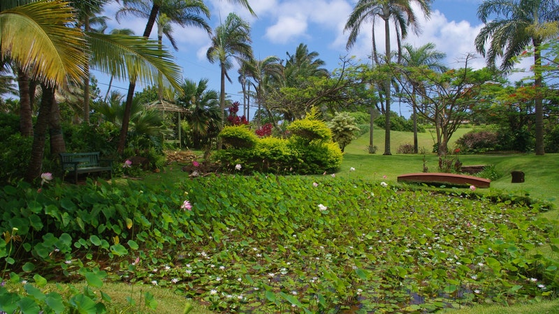 Hawaii vaccination passport launches