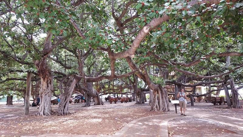 HAT Blog Maui dispatch: Lahaina